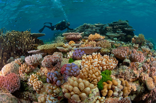 Great Barrier Reef, Australia http://ngm.nationalgeographic.com/2011/05/great-barrier-reef/holland-text