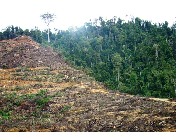 The forests surrounding many protected areas are being rapidly cleared or degraded. Shown is recent deforestation for oil palm plantations along the edge of Bukit Palong National Park in Peninsular Malaysia. Photo by William Laurance, http://theconversation.com/are-nature-reserves-working-take-a-look-outside-9432